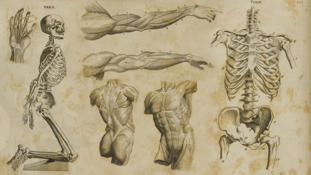 Why should Dancers study Anatomy?